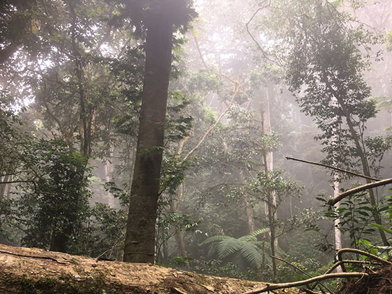 Mt Kasigau – ancient indigenous forest