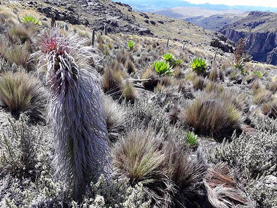 Mt Kenya climbing – take spikes withyou