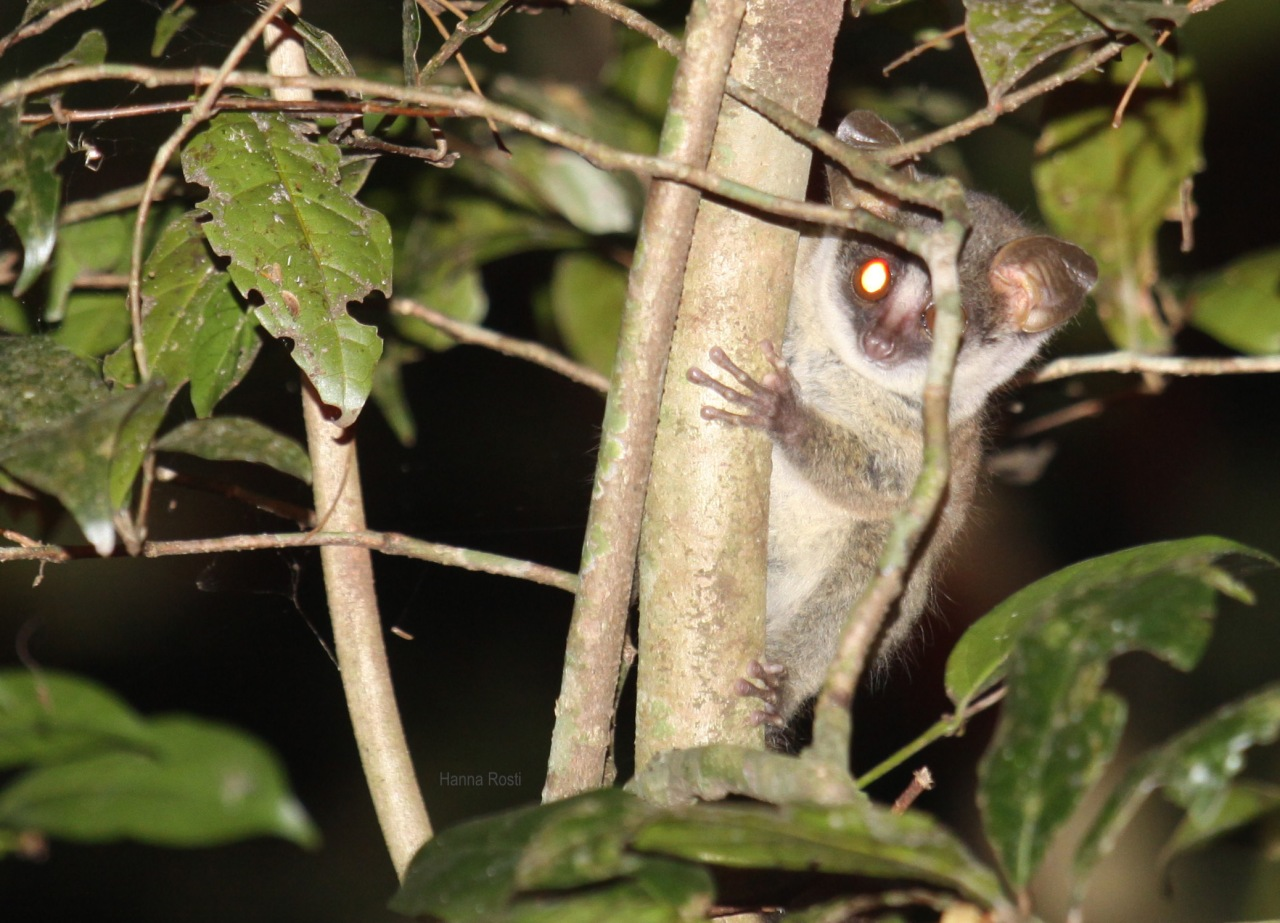 IUCN CRITERIA – populations matter themost!